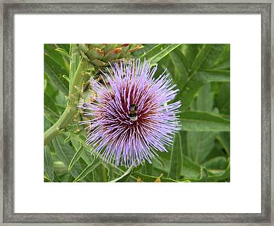 Framed Print featuring the photograph Bee by Manuela Constantin