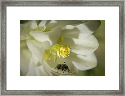 Bee Mine Framed Print by Teresa Mucha