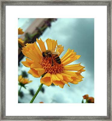 Bee Nice Framed Print