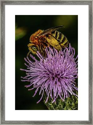 Framed Print featuring the photograph Bee On A Thistle by Paul Freidlund