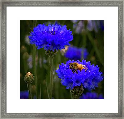 Bee On Button Framed Print by Jean Noren