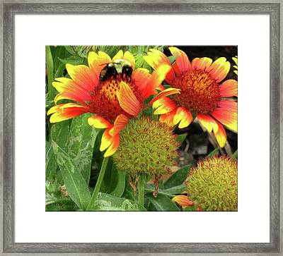 Bee On Colorful Flowers Framed Print by Mikki Cucuzzo