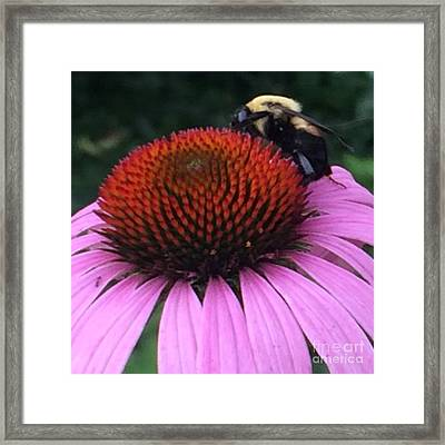 Bee On Flower By Saribelle Rodriguez Framed Print by Saribelle Rodriguez