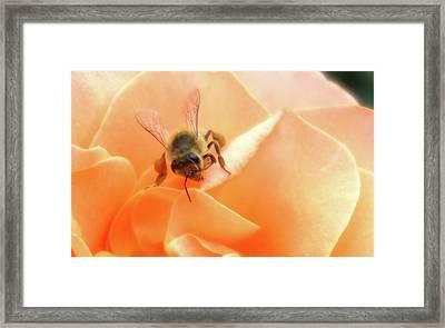 Bee On Flower Framed Print by Matthew Bamberg