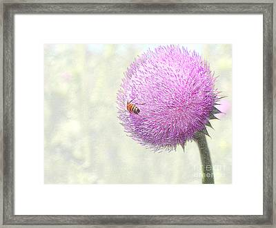 Bee On Giant Thistle Framed Print