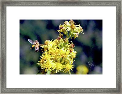 Bee On Goldenrod Framed Print