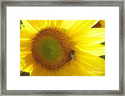 Framed Print featuring the photograph Bee On Sunflower by Jean Bernard Roussilhe