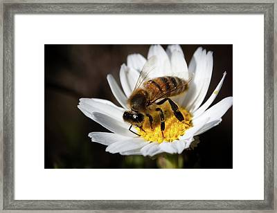 Framed Print featuring the photograph Bee On The Flower by Bruno Spagnolo