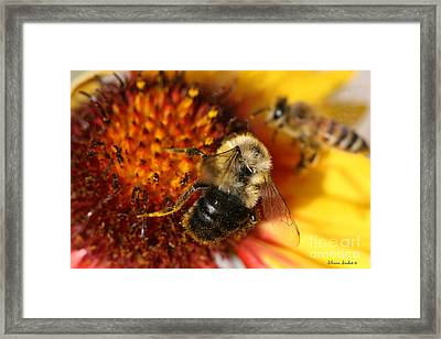Bee One Framed Print by Silvana Siudut