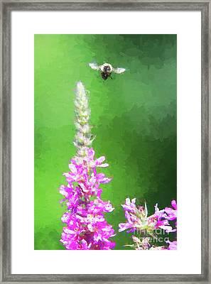 Bee Over Flowers Framed Print