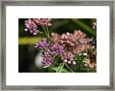 Bee Paradise Framed Print by William Tasker
