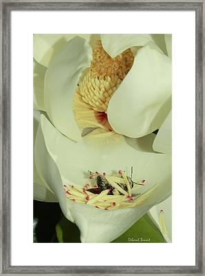 Bee Pollen Overdose Framed Print by Deborah Benoit