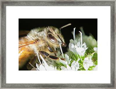 Bee Portrait Framed Print by Mircea Costina Photography