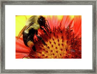 Bee Red Flower Framed Print