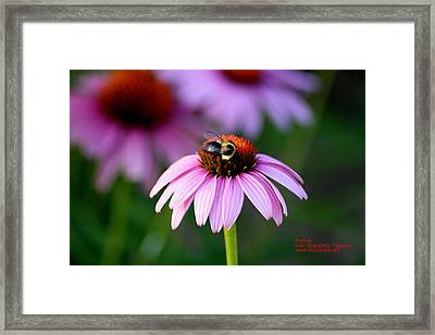 Bee Right Framed Print