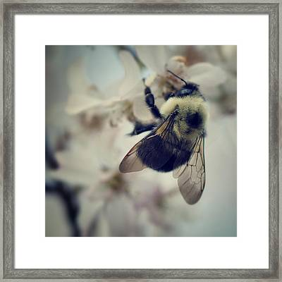 Bee Framed Print by Sarah Coppola