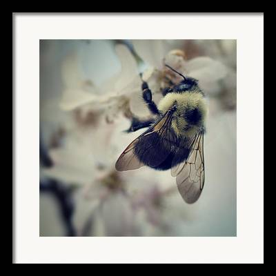 Bumble Bee Framed Prints
