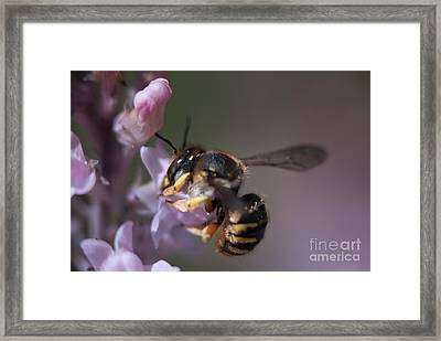 Bee Sipping Nectar Framed Print