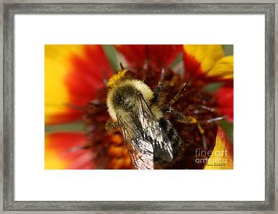 Bee Six - Framed Print by Silvana Siudut