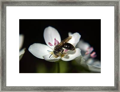 Bee Still Framed Print by Off The Beaten Path Photography - Andrew Alexander