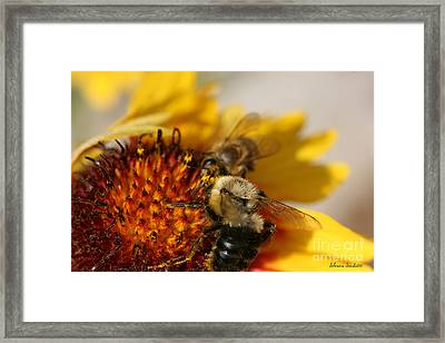 Bee Two Framed Print by Silvana Siudut