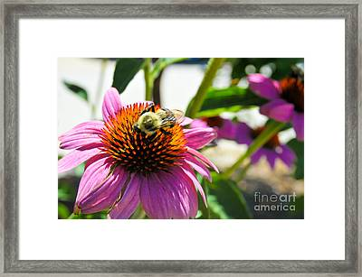 Bee-utiful Framed Print by Maureen Norcross