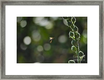 Bee Wannabe Framed Print