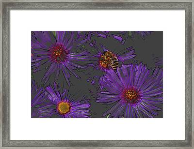 Bee With Asters On Gray Framed Print by ShaddowCat Arts - Sherry