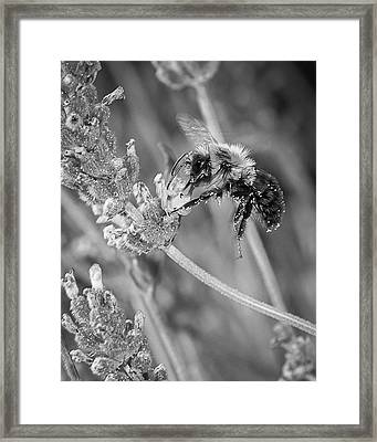 Bee Works Lavender Framed Print by Len Romanick