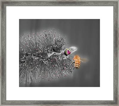 Beeautiful Framed Print by Kelly Jones