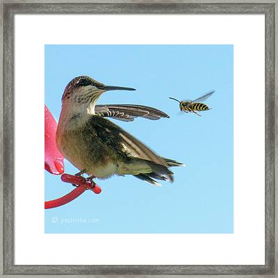Bee_bird Framed Print