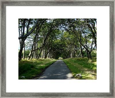 Beech Avenue Framed Print