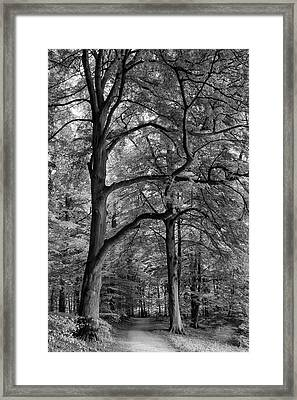 Beech Forest - 365-222 Framed Print by Inge Riis McDonald