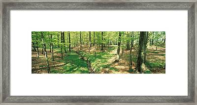 Beech Forest Framed Print by Panoramic Images