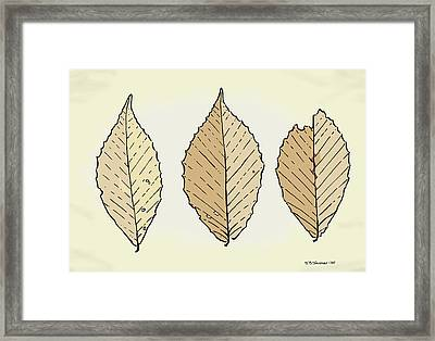 Beech Leaf Illustration Framed Print by Jamie Jorgensen