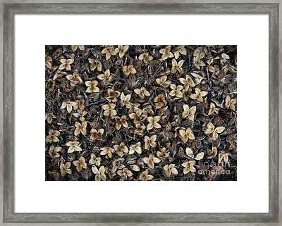 Beech Nut Husks Framed Print