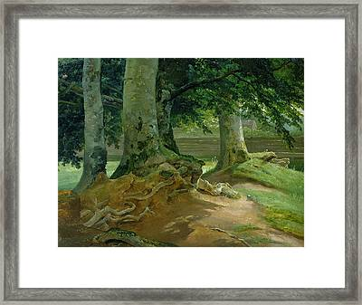 Beech Trees In Frederiksdal Near Copenhagen Framed Print by Christian Ernst Bernhard Morgenstern