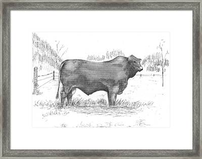 Beefmaster Drawing By Barney Hedrick