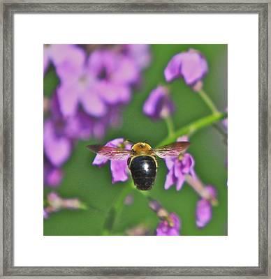 Beehind Framed Print by Robert Pearson