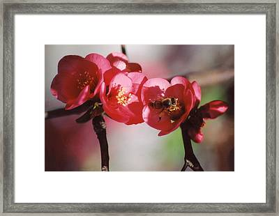 Beeing Pretty Busy Framed Print by Jan Amiss Photography