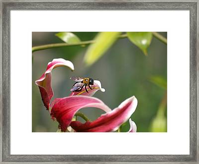 Beeing Framed Print by Ron Plasencia
