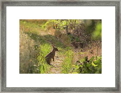 Been Spotted Framed Print