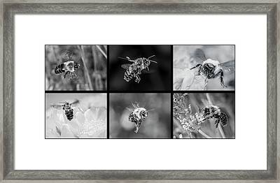 Bees In Flight In Black And White Framed Print