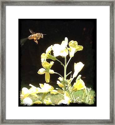 Bees Love Broccoli Framed Print
