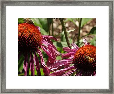 Bee's Nectar Framed Print