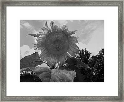 Framed Print featuring the digital art Bees On A Sunflower by Chris Flees