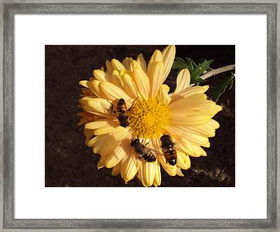 Bees On Feast Framed Print by David Du Hempsey