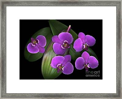 Bees On Green Framed Print