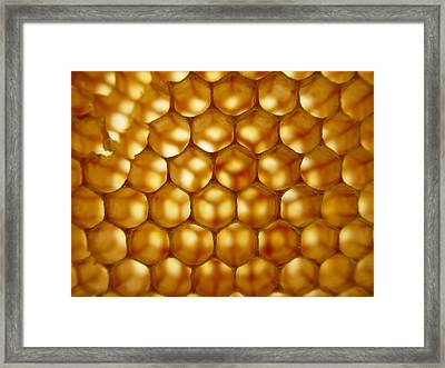 Bees On Holiday Framed Print by Eric Workman