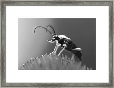 Beetle In Black And White Framed Print